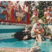 Fairy-penguin-feeding-at-King-Neptune's-Park-c1980
